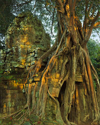 Ficus & East Entry Tower (Gopura) at Dawn, Ta Som; Angkor, Cambodia;