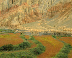 Buckwheat, Barley and Cliffs, Dakmar; Mustang, Nepal